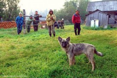 Read this amazing story about the hero puppy…